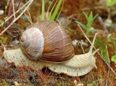 escargots comestible pologne ferme snails garden. Black Bedroom Furniture Sets. Home Design Ideas